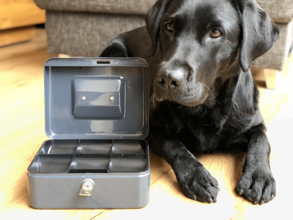 Hundeschule Bochum Preise - Der Hund Abbey liegt neben einer Kasse