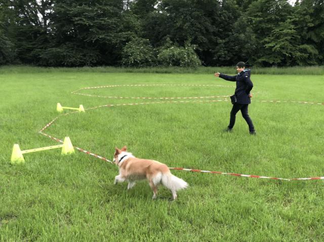 Anja Mersdorf beim Körpersprachlichen Longieren mit Ihrem Hund Cookie
