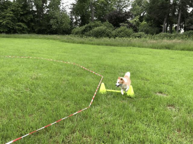 Der Hund Cookie von der Hundeschule Mersdorf trainiert Körpersprachliches Longieren