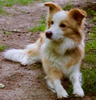 Der Hund Cookie von der Hundeschule Mersdorf in Bochum