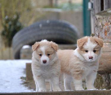 Vortrag ein Welpe zieht ein. Hundeschule Bochum. Zwei Welpen im Winter auf der Terasse