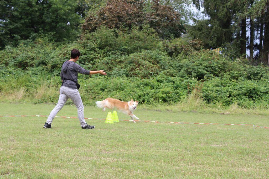 Longieren durch körpersprachliche Führung des Hundes